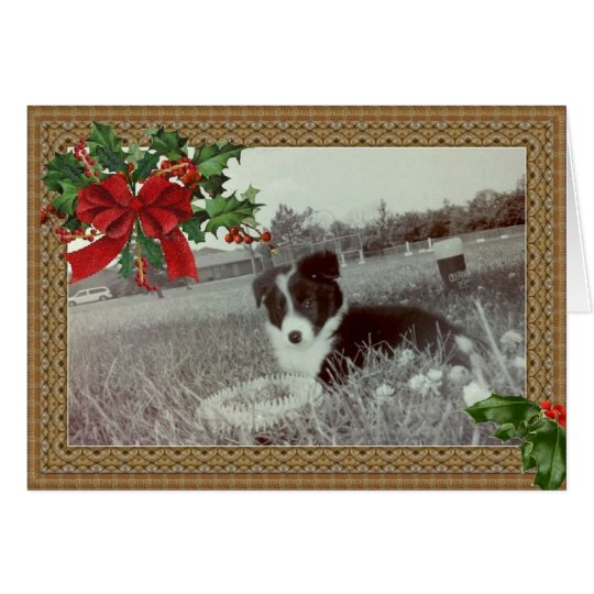 Abby the Awesome Border Collie~Christmas Card