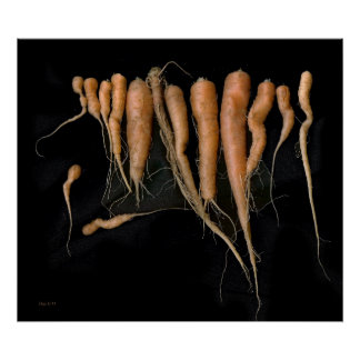 Abby's Carrots Posters