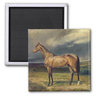Abdul Medschid' the chestnut arab horse, 1855 Square Magnet