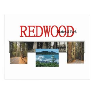 ABH Redwood Postcard