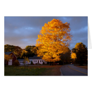 Ablaze: Gorgeous maple lit by evening sun in fall Card