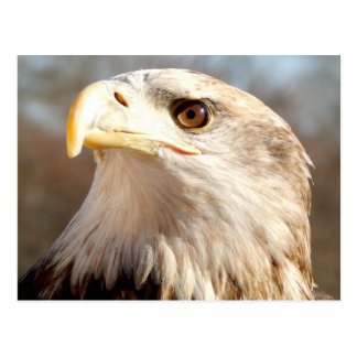 About Bald Eagle Post Cards