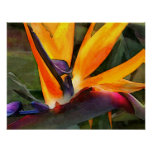Abstract Bird of Paradise Poster