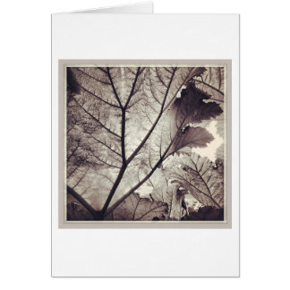 Abstract black and white foliage card