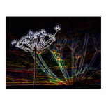 Abstract Cow Parsley post card