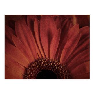 Abstract Daisy Postcard