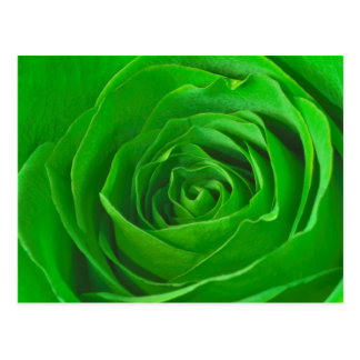 Abstract Emerald Green Rose Center Photograph Postcard