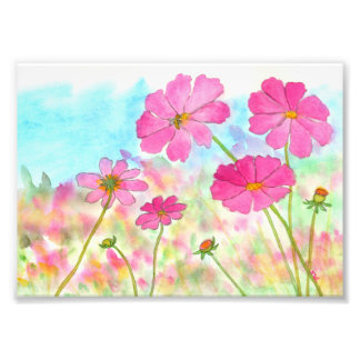 Abstract Floral Art Pink Cosmos Wild Flowers Photographic Print