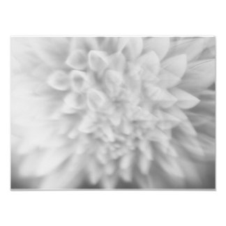 Abstract Floral Black and White Dahlia Print Photo