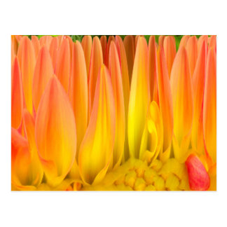 Abstract Flower Postcards