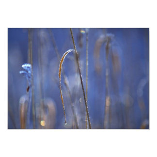 Abstract Marsh at dawn covered with hoar-frost 13 Cm X 18 Cm Invitation Card