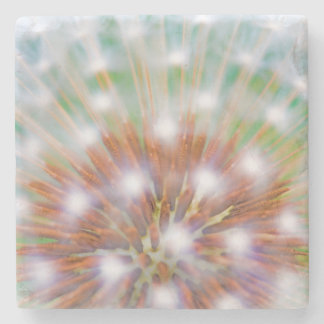 Abstract of dandelion seed head stone coaster