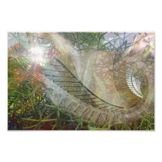 Abstract of Nature Photographic Print