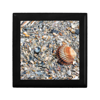 abstract shells on the beach gift box