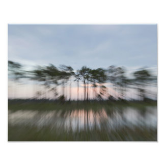 Abstract Trees Photo Print