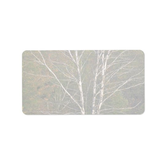 Abstract White birch tree on the edge of a hardwoo Address Label