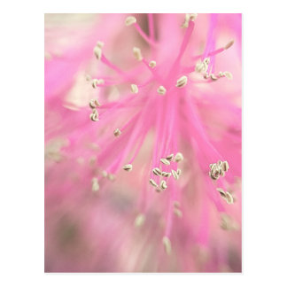 Abstract Wild Flower Postcard
