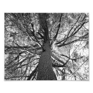 Abtract Old Tree Art Photo