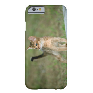 Abyssinian Barely There iPhone 6 Case