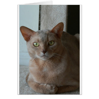 Abyssinian Card