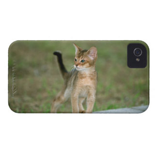 Abyssinian Case-Mate iPhone 4 Case