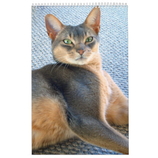 Abyssinian Cat Calendar (customize any year)