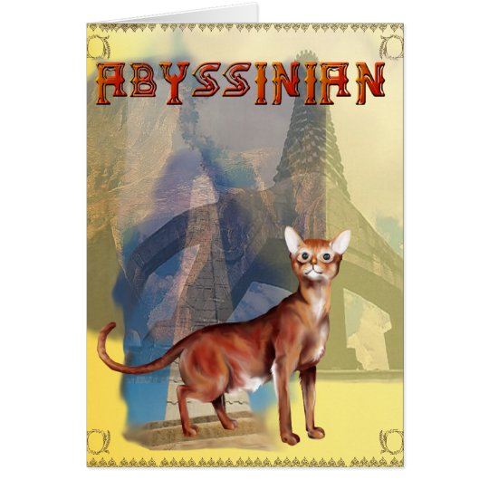 Abyssinian Cat Card
