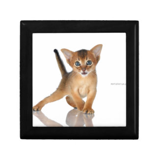 Abyssinian cat gift box