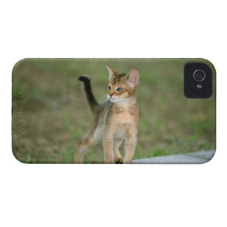 Abyssinian iPhone 4 Case-Mate Case