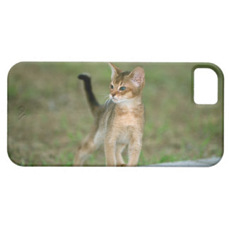 Abyssinian iPhone 5 Covers