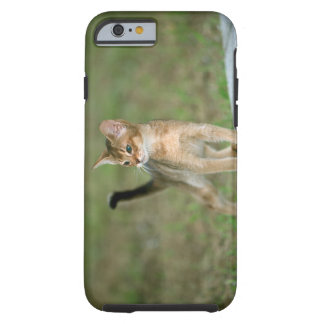 Abyssinian Tough iPhone 6 Case