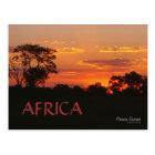 Acacia Sunset Africa Postcard