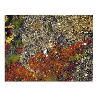 """""""Acadian Tide Pool"""" Postcard"""