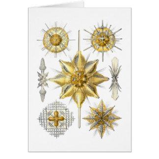Acanthometra Greeting Card