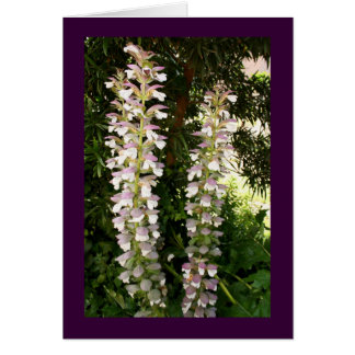Acanthus Blossoms Greeting Card