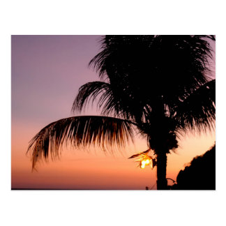 Acapulcan Palm at Dusk Postcard