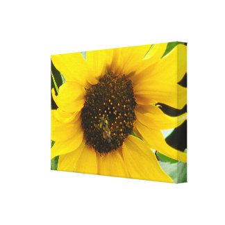 Accented Busy Bee Gallery Wrap Canvas