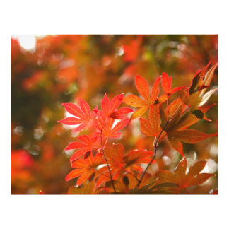 Acer leaves 21.5 cm x 28 cm flyer