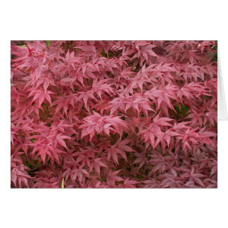 acer palmatum leaves card