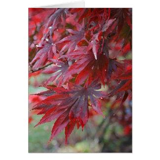 Acer palmatum 'Trompenburg' Card