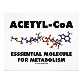 Acetyl-CoA Essential Molecule For Metabolism Full Color Flyer
