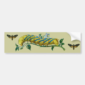 Acherontia atropos caterpillar, Acherontia atropos Bumper Sticker