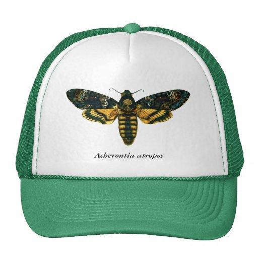Acherontia atropos hat