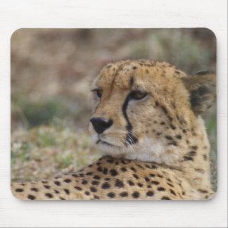 Acinonyx jubatus mouse pad
