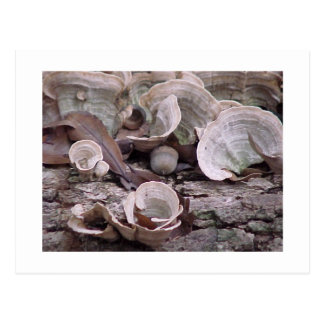 Acorn and Fungi ©2006 Post Card