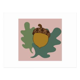 Acorn And Leaves Postcard