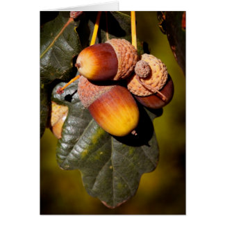 Acorn Cluster Greeting Cards