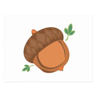 Acorn Nut Post Cards