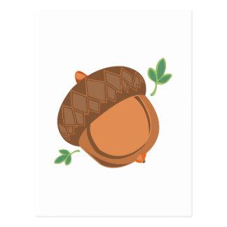 Acorn Nut Postcard