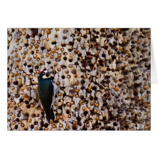 Acorn Woodpecker Card